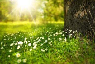 Jakie rozwiązania ekologiczne warto wprowadzić w swoim ogrodzie?
